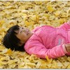昭和記念公園の紅葉の時期はいつ?スポットはどこ?赤ちゃん休憩室がある?