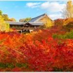 東福寺の紅葉の見頃は?混雑するの?ライトアップは?
