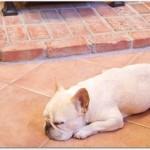 床暖房の電気代はエアコンと比較したら?つけっぱなしは?ガス代とどっちがお得?