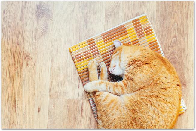 フローリングに敷かれたマットの上で寝る猫