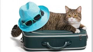 猫と旅行は一緒にできる?車に乗せて大丈夫?注意することは?
