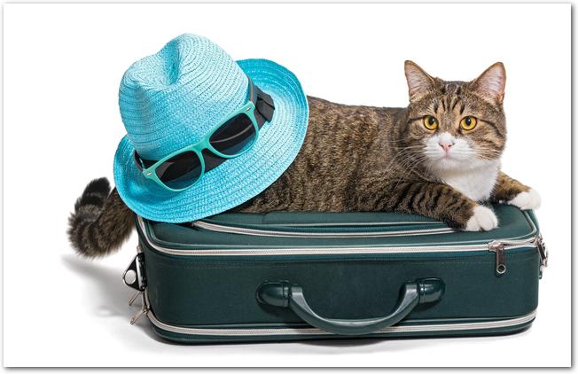 旅行トランクの上に乗っかっている猫