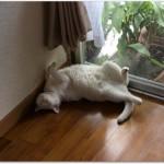 猫は暑さに強い弱いどっち?暑さの対策にエアコンは必要なの?