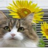 猫って夏は暑いの?夏毛と冬毛がある?夏バテはしないの?