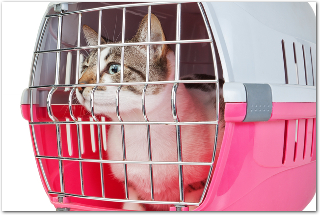キャリーバッグに入れられた猫の様子