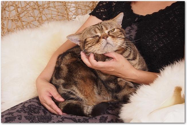 ペットの猫を抱き上げる女性の様子