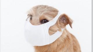 犬の花粉症の症状ってどんなの?原因は何?対策方法は?