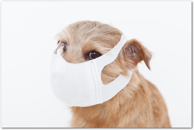 マスクをかけた小型犬