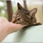 猫が熱中症になったらどんな症状なの?塩分が必要?対策は何をすればいい?