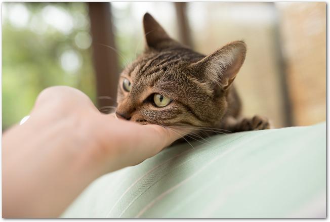 猫のアゴの下を手で撫でている様子