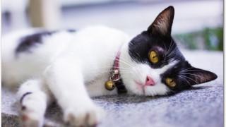 猫が夏バテ?食欲が減っていたり嘔吐する場合はどうすればいい?