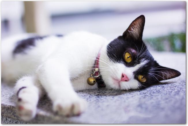 寝転がっている白黒の猫の様子