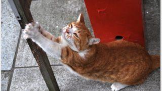 猫の爪とぎ対策シートってどう?おすすめの方法は?