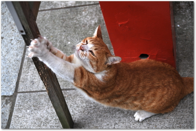 爪とぎをしている猫の様子