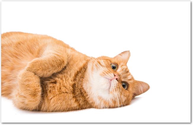 窓辺で寝転ぶ子猫の様子