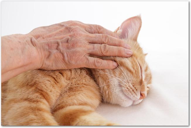 寝転がった猫が撫でられている様子