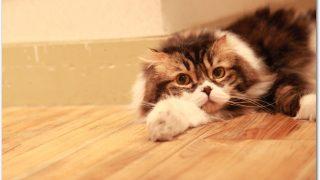 ペット不可で猫の違約金は?賃貸マンション退去時の対策と現状回復とは?