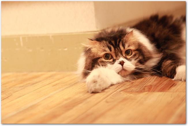 フローリングの床に寝転ぶ飼い猫