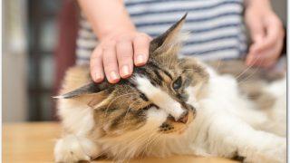 賃貸で猫を内緒で飼える?違反するとどうなる?トラブルになる?