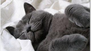猫を飼いたいけどどこで探す?必要なものは?お金はどのくらいかかるの?