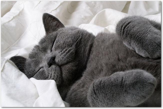 眠っている白黒の猫を撫でる女性の左手