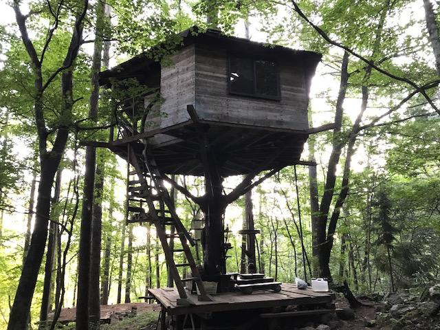 千年の森自然学校のツリーハウス