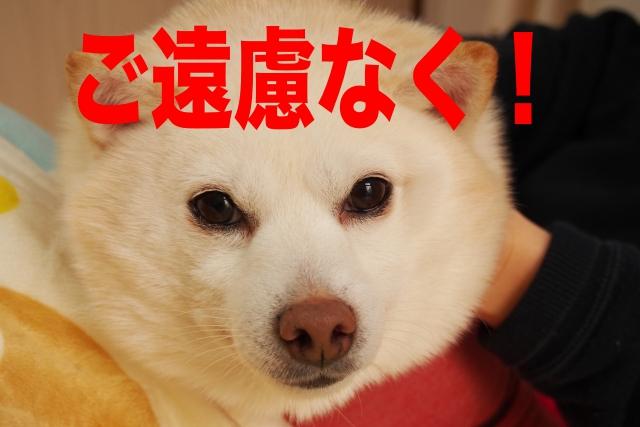 白い犬(ご遠慮なく)